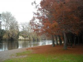 Autumn Waikato River