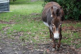 Donkey at Kaikoura Farm Park