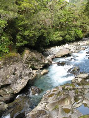 Fiordland Native Forest