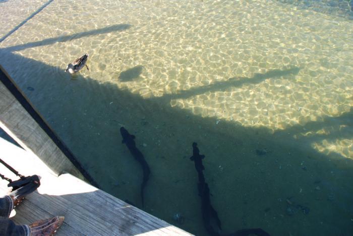 Fresh Water Eels - Photo of Tasman - Nelson New Zealand at ...