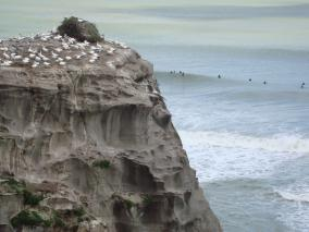 Gannet and surfers