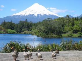 Mt. Taranaki from Lake Mangamahoe