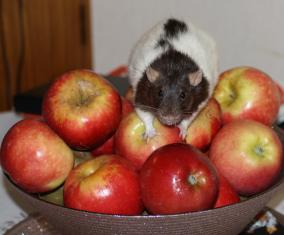 Whats on the apples?