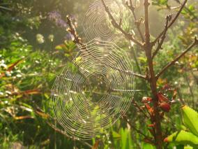 Spider Webs in The Sunshine