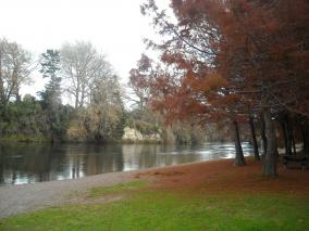 Waikato River in Autumn