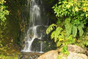 Waterfall in the Bush